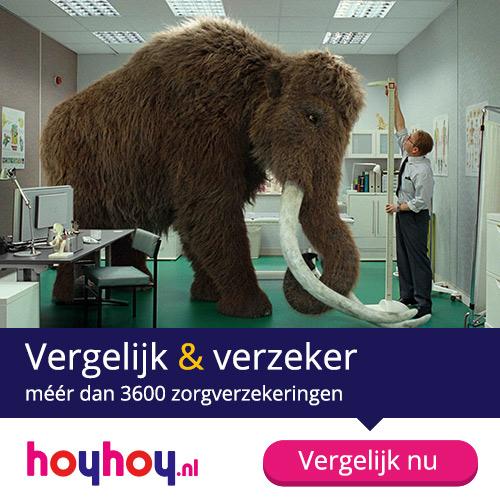 HoyHoy-6_Affiliate_zorg